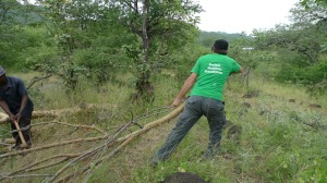 Removing a fallen tree on the way to Mphanda